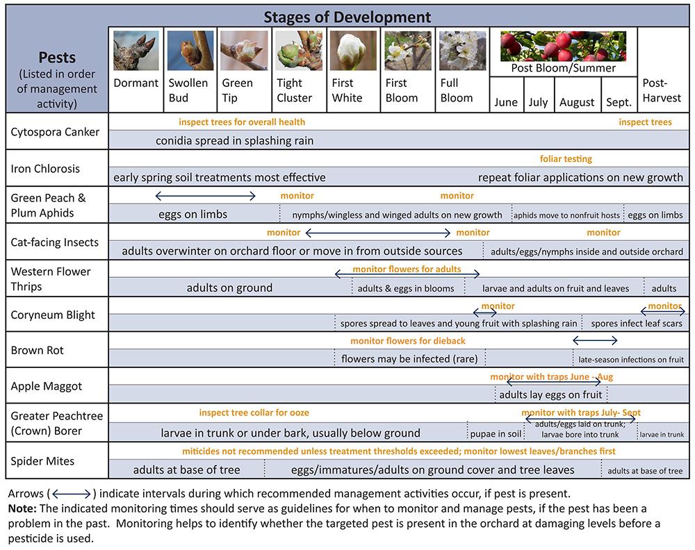 Plum Pest Phenology Calendar Intermountain Fruit Usu